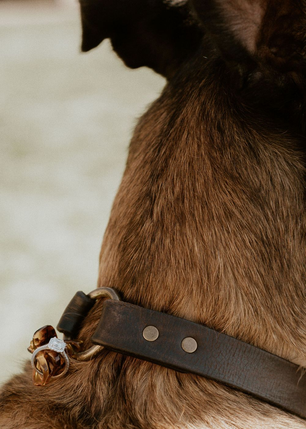 Ring tied to dogs collar