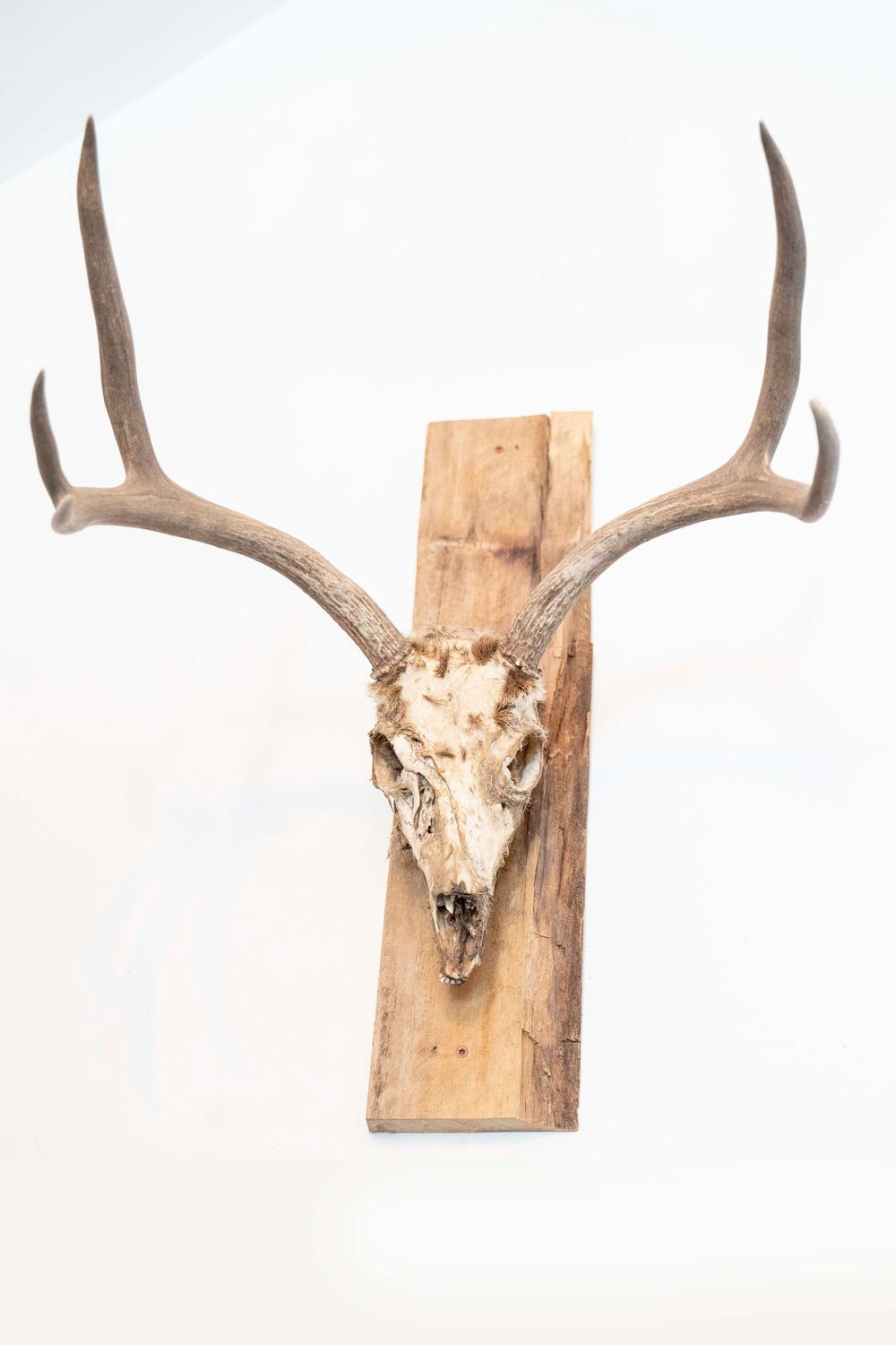 Antler wall decoration in the carriage house at at Fallen Oaks Estate