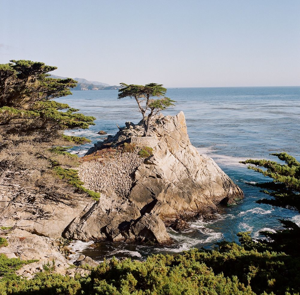 Aaron Snow Photography California Wedding Photographer Carmel by the sea Lone Cypress Tree 17 mile drive Hasselblad
