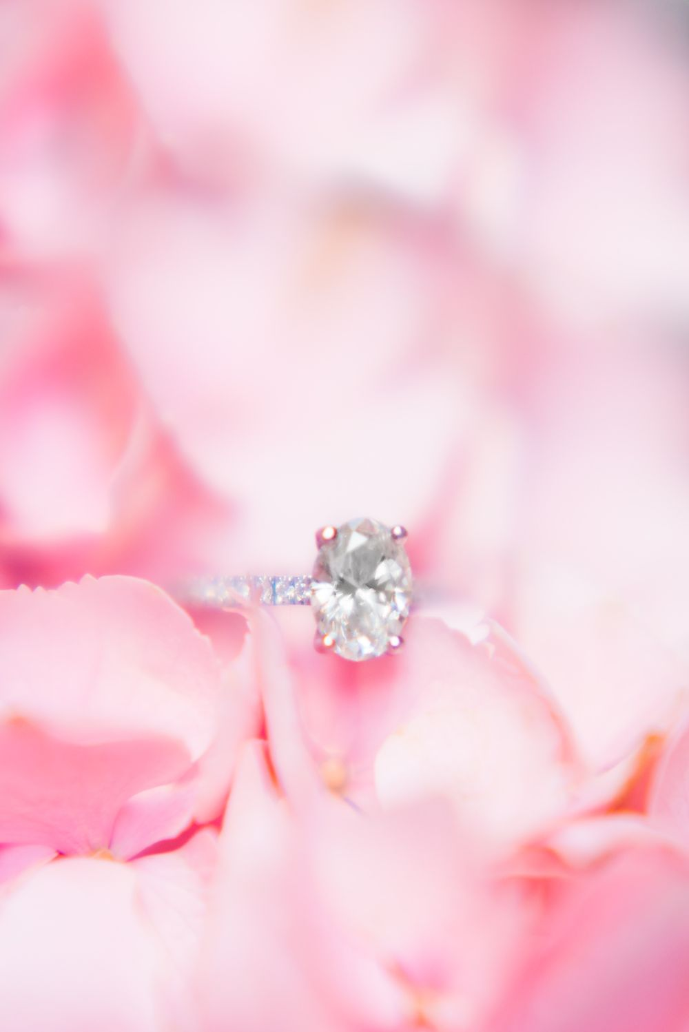 oval white gold engagement ring on pink hydrangeas