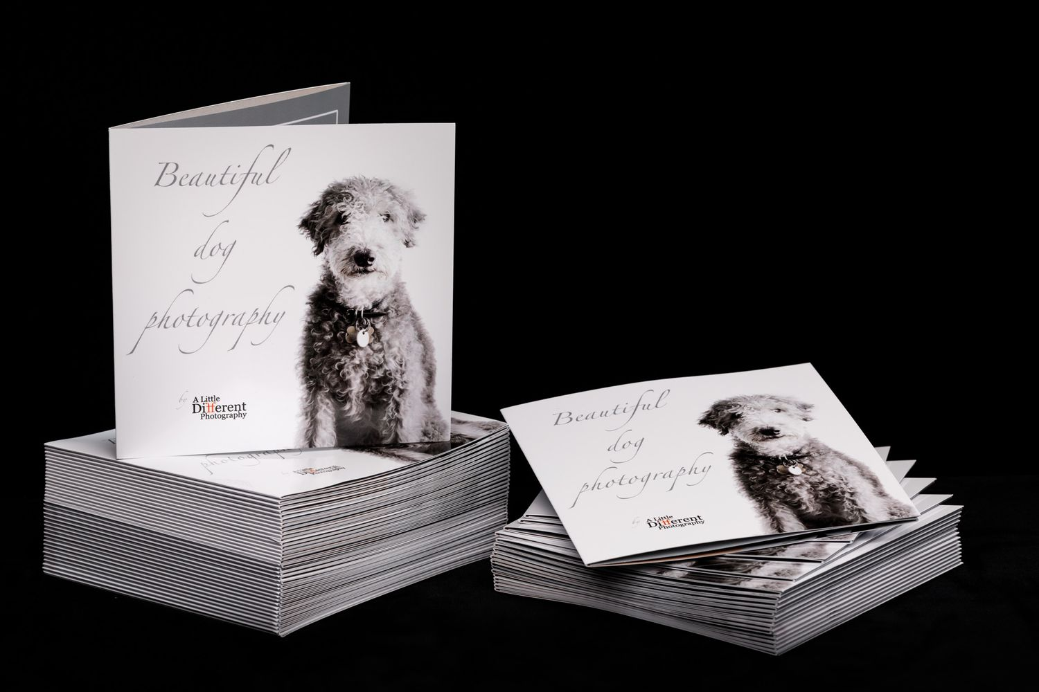 Dog photography in Lambourn Berkshire