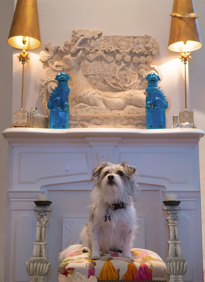 Terrier Dog Sitting on Bench in Living Room by Zurich Photographer Leslie Argote