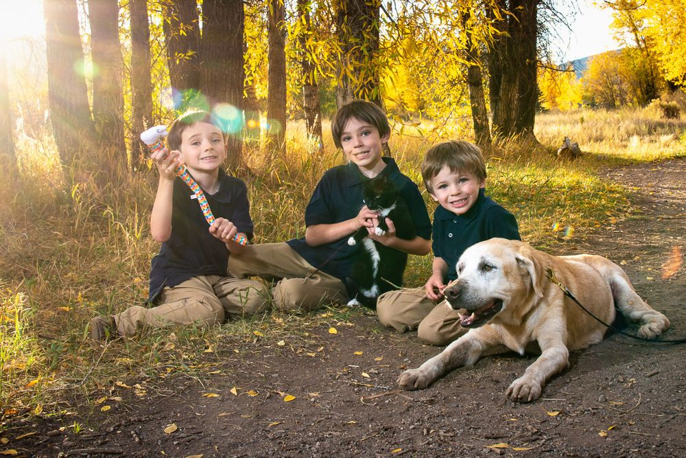 Three young brothers, old dog and cat on the ground with foliage